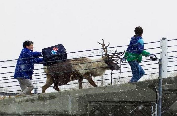 reindeer-dominos-delivery1