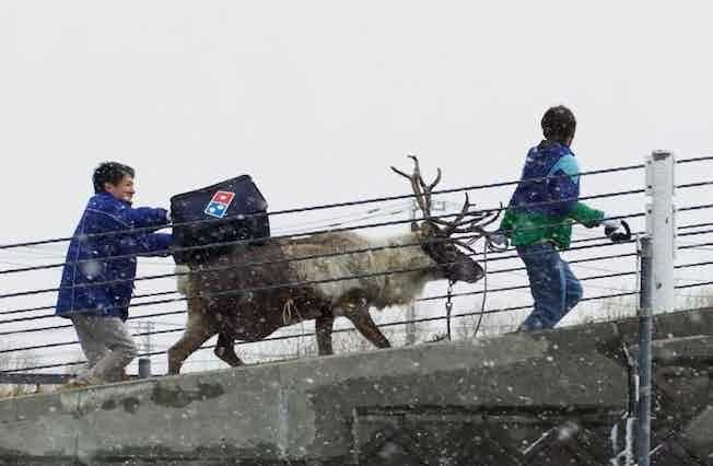 reindeer-dominos-delivery1