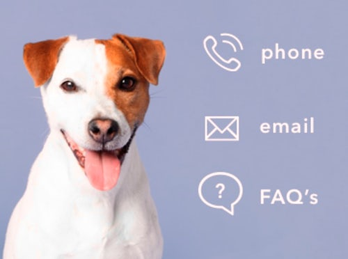 dog and contact-us icons