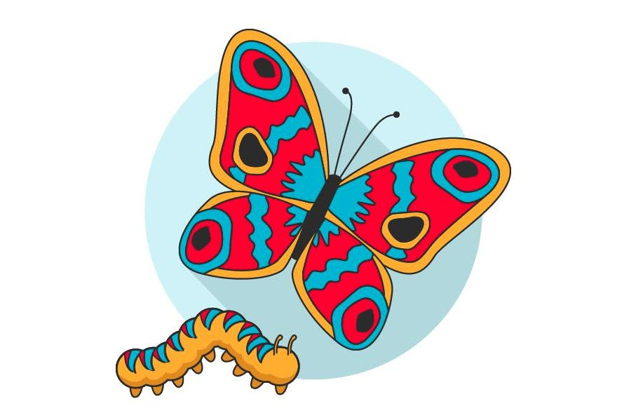 Illustration of a caterpillar and a butterfly