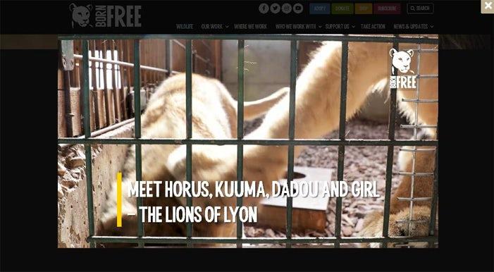 26 Born Free video