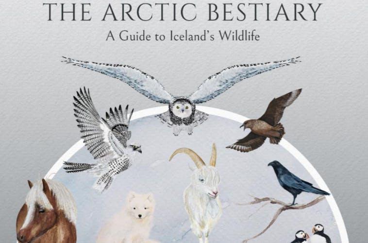 Arctic Bestiary Iceland's Wildlife docugraphic