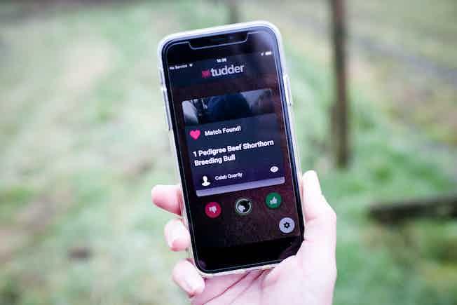 Tudder Tinder for cows app on mobile