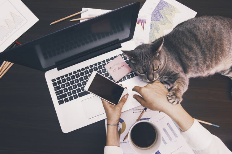 woman working with laptop and cat holding phone